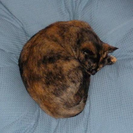 かなり見事な猫饅頭②