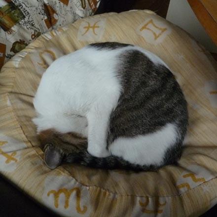 かなり見事な猫饅頭①