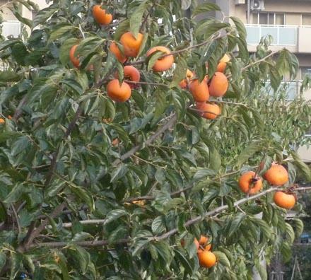 ハナミズ木④