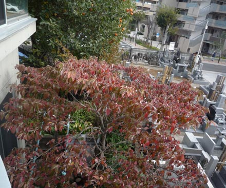 ハナミズ木⑤