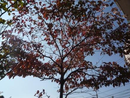 ハナミズ木⑥