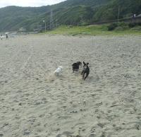 私の台風4号の波 2012-6-17 8