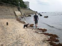 私の台風4号の波 2012-6-17 13