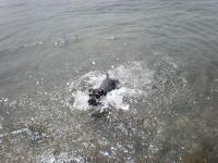 私の台風4号の波 2012-6-17 14