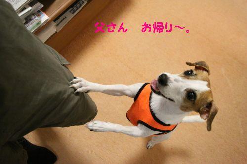 DPP_09_20121030225535.jpg