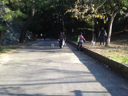 DPP_21_20121112230246.jpg