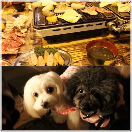 飼い主達は焼き肉ご飯、白黒姉妹はお外でご飯