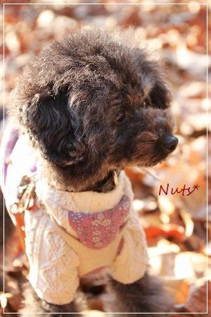 ナッツも満足顔、かな?