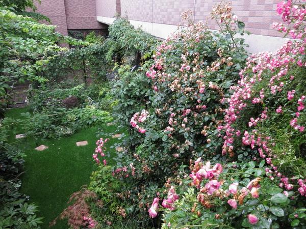 横浜の庭3