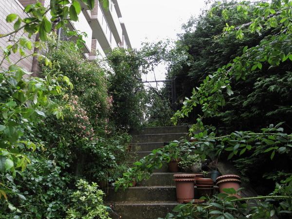 階段の上のバラ1