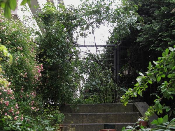 階段の上のバラ2