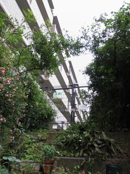 階段の上のバラ4