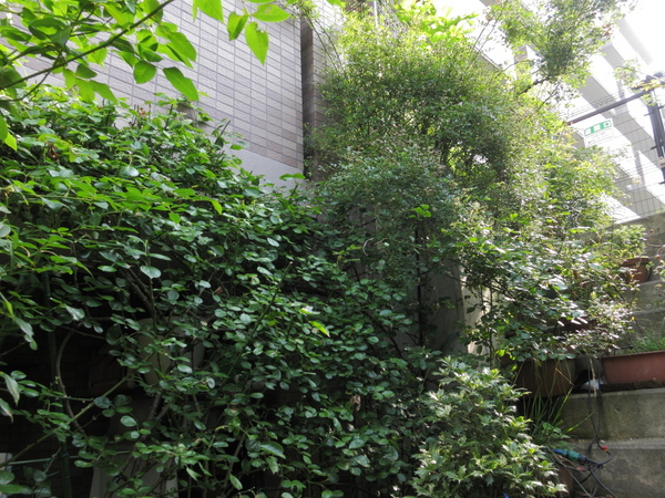横浜の庭4