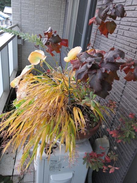 カラーリーフ寄せ植え