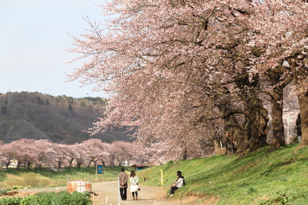 一目千本桜4