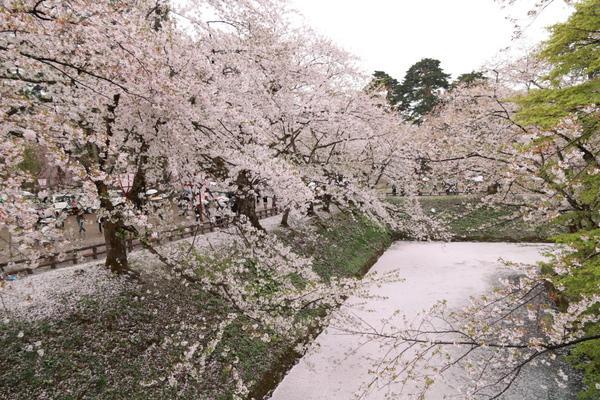 弘前城公園6