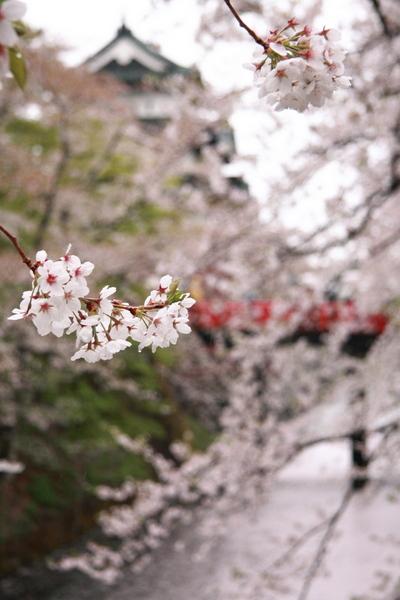 弘前城公園7