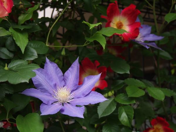5月9日の庭 3