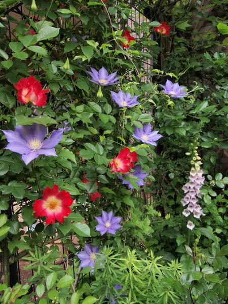 5月9日の庭 2