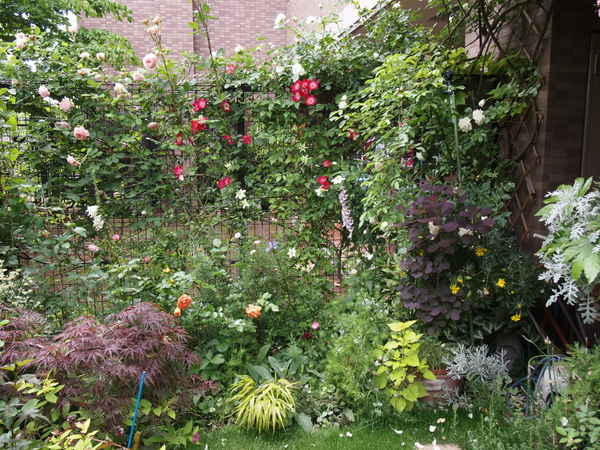 フェンス沿いのバラ花壇