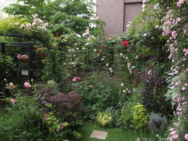 芝庭周りのバラ花壇