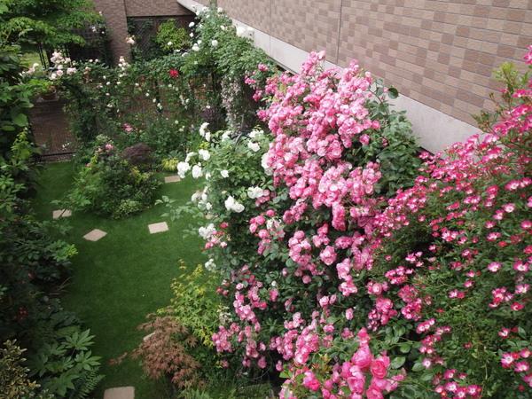 横浜の庭全景20120526
