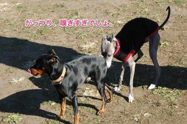 DSC_0005_1.jpg