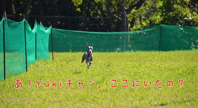 DSC_4371.jpg