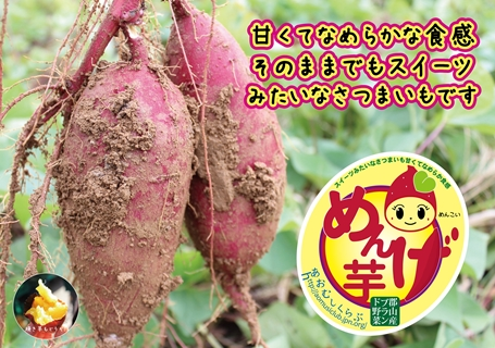 131101めんげ芋広告A3よこ_s