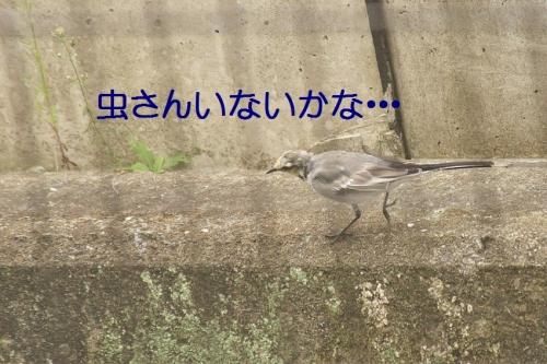 002_20141007183832f61.jpg