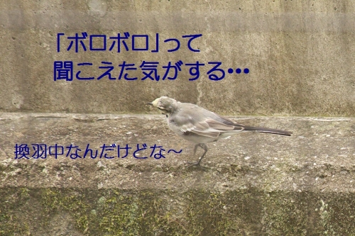 003_20141007183840e64.jpg