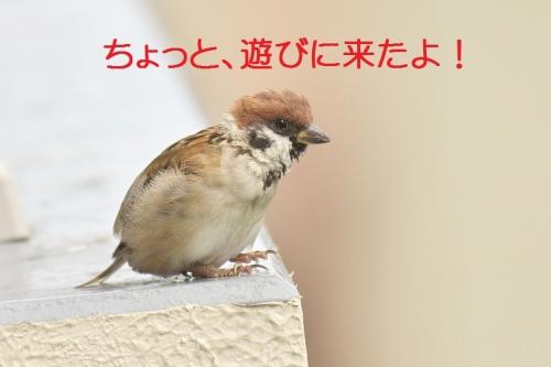 010_20141005184756c29.jpg