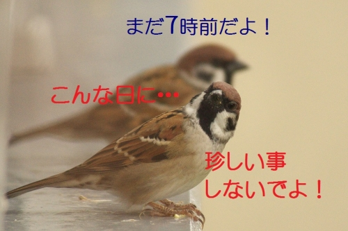 030_20141013185637ddb.jpg