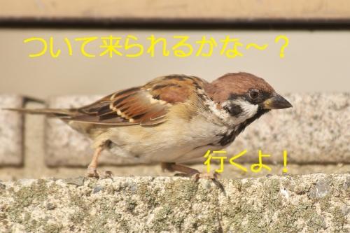 040_20140930195729e32.jpg