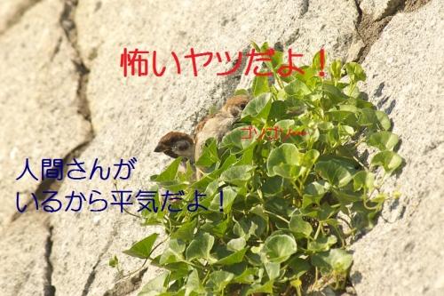 040_20141002191523307.jpg