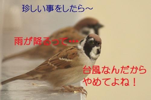 040_20141013185637c93.jpg