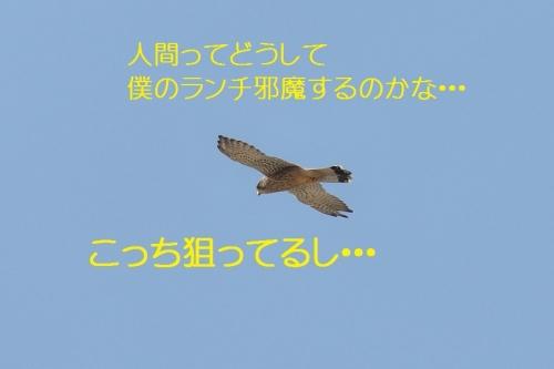 070_20141002191626ebf.jpg
