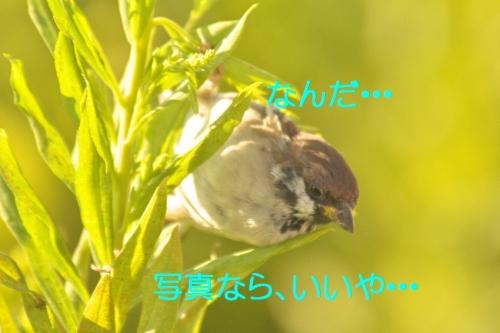 090_20140930200126b35.jpg