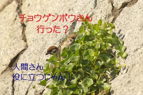 090_20141002191631d31.jpg