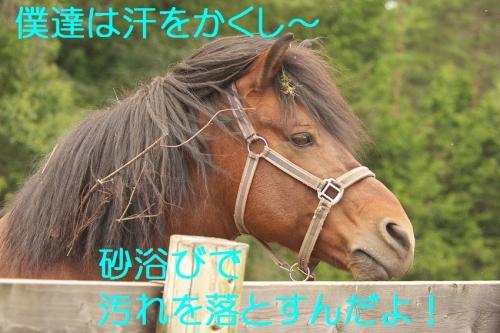 100_20140920203237b09.jpg