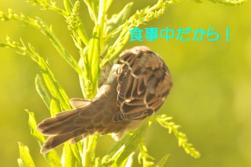 100_201409302001266cd.jpg