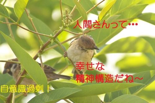 100_20141002191633e85.jpg