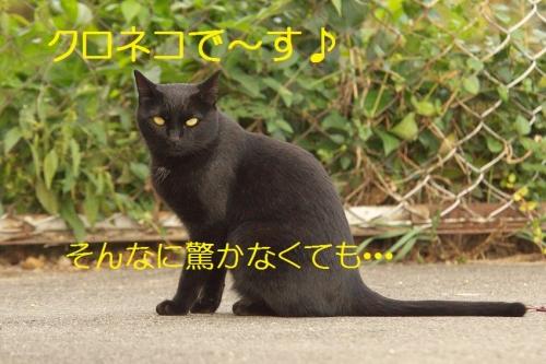 100_2014100718430407b.jpg