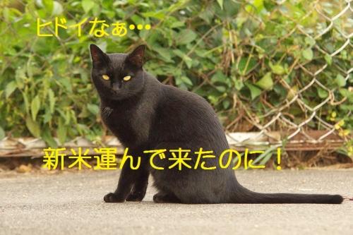 107_20141007184309a8a.jpg