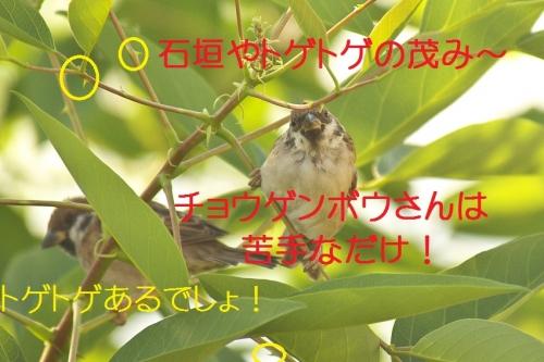 110_20141002191720c40.jpg