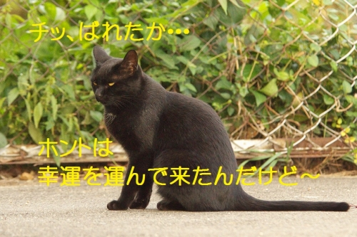 110_2014100718435559b.jpg