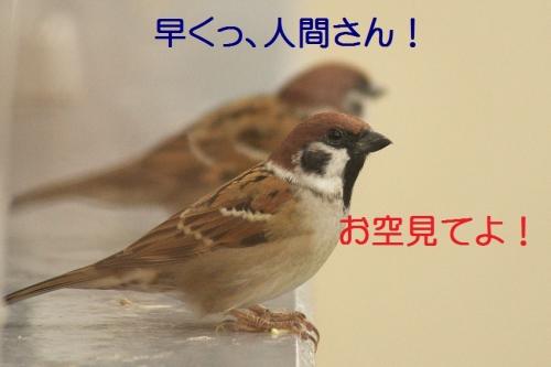 110_20141013185746d09.jpg