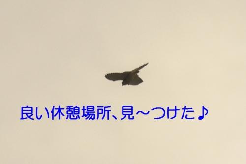130_20141013185949130.jpg