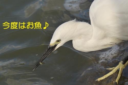 130_201410191734259c9.jpg