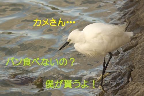 140_2014101917342893c.jpg